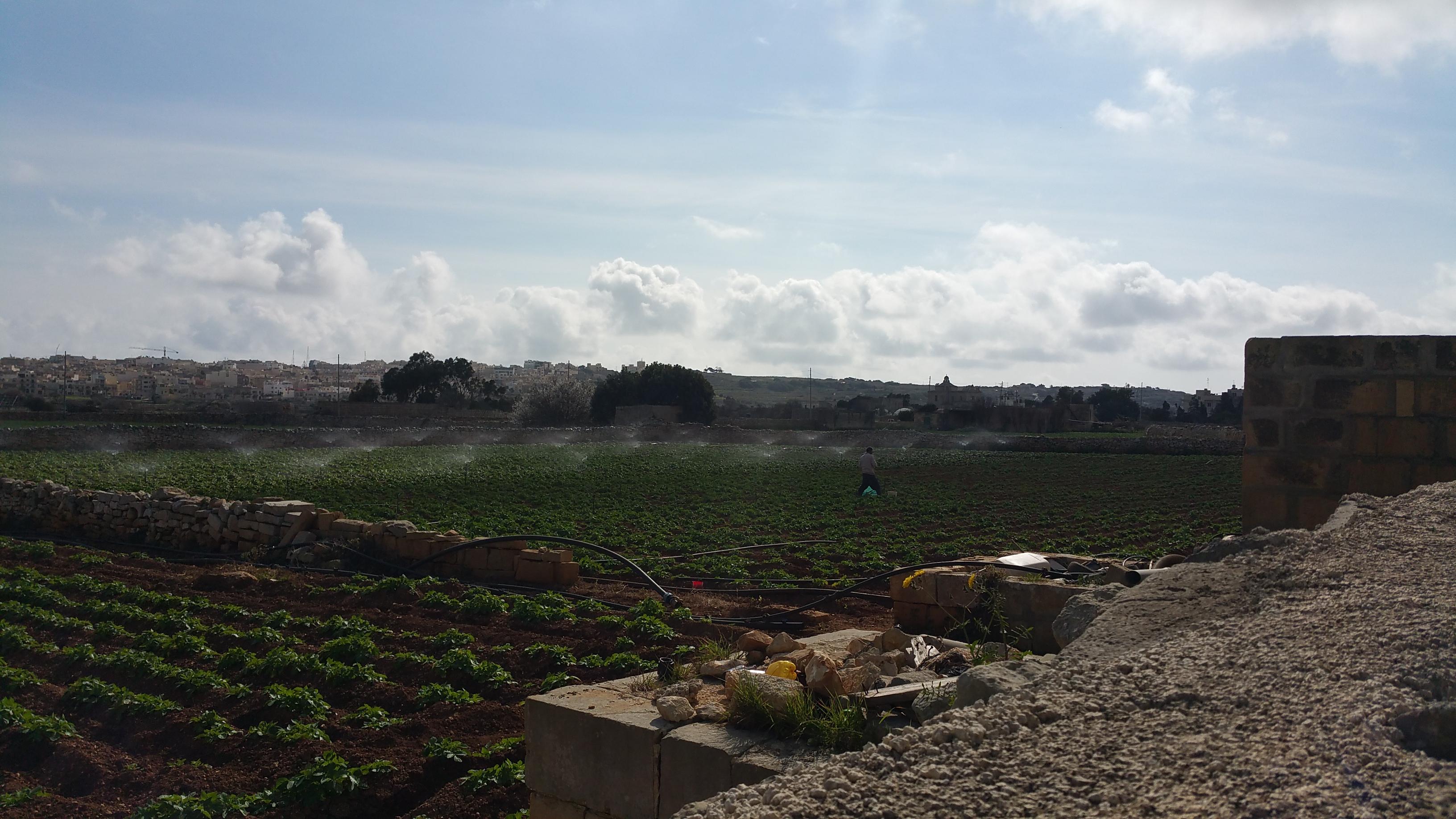 Is-saqi tal-għelieqi tal-patata ta' Ħal Lew, il-Qrendi... Minħabba n-nixfa xitwija, dis-sena l-bdiewa kellhom jidħlu f'ħafna iktar spejjeż mis-soltu.