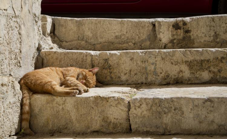 Artist-in-Residency (AiR) Programme (Gozo)